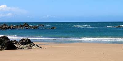 Beach Batz