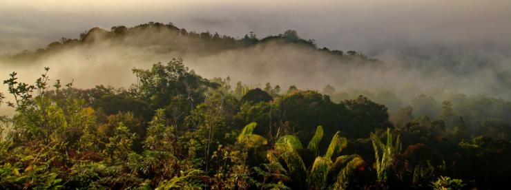 Sandy Millin Borneo Forest