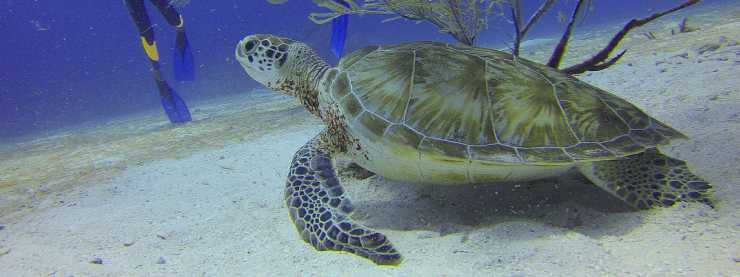Riviera Maya Wildlife